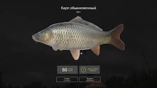 Русская рыбалка 4 - озеро Куори - Рыбное ассорти