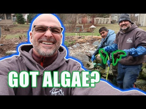 How To Control Algae Growth In Ponds