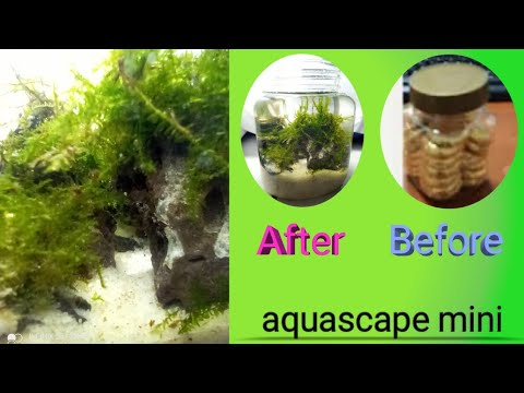 how-to-make-mini-aquascape-with-used-chocolate-bottles