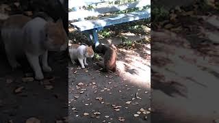 Деревенские коты 🐈