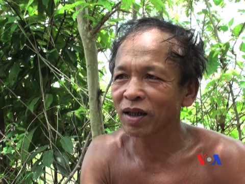 Rừng vàng ở Campuchia