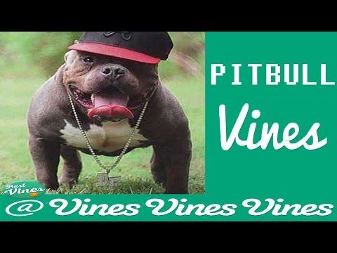 *NEW* Funny Pitbulls Vines Compilation