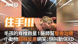 醫師幫整骨治脊椎 小動物超萌反差逗網笑:快叫動保XD|寵物動物|動物整骨師|美國