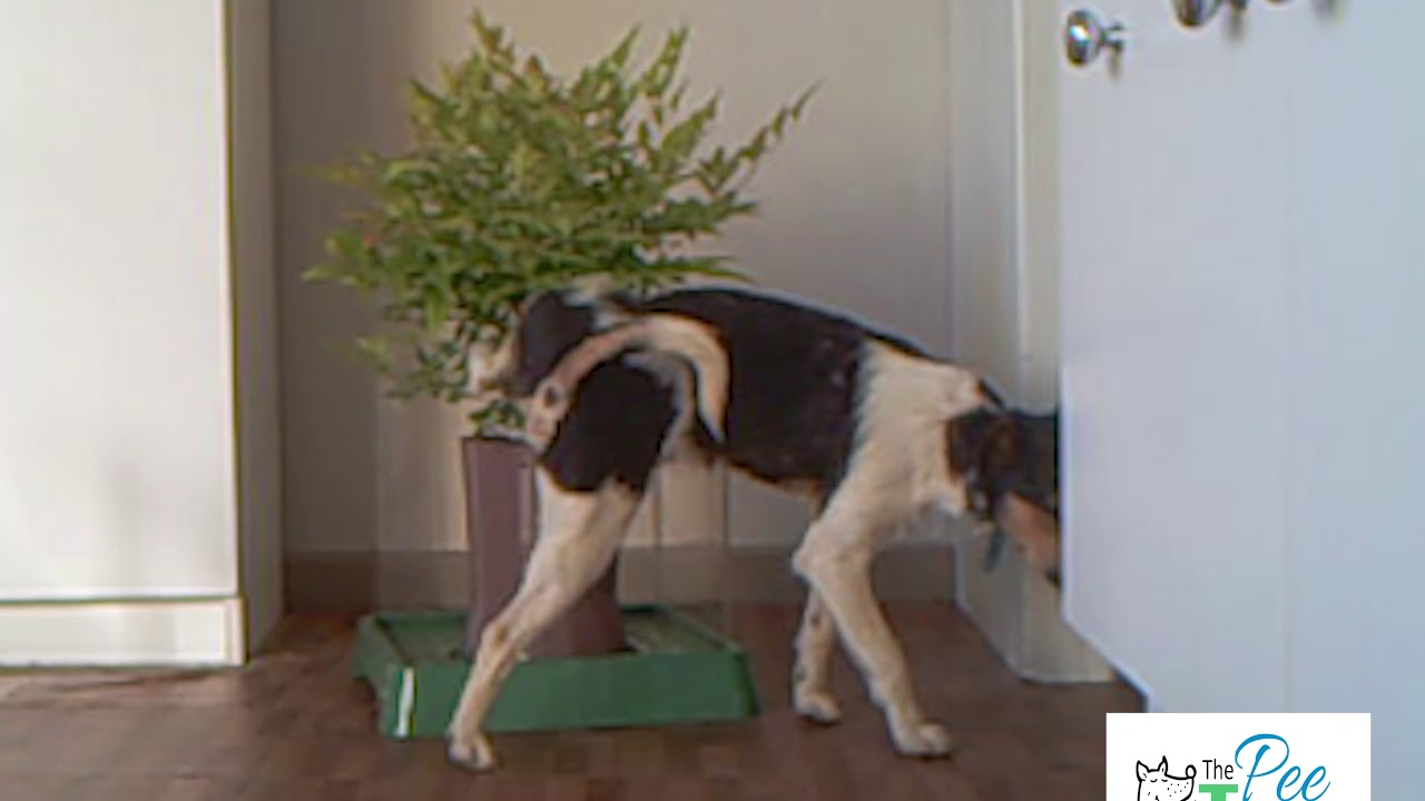 The Tree Indoor Dog Toilet With A Difference