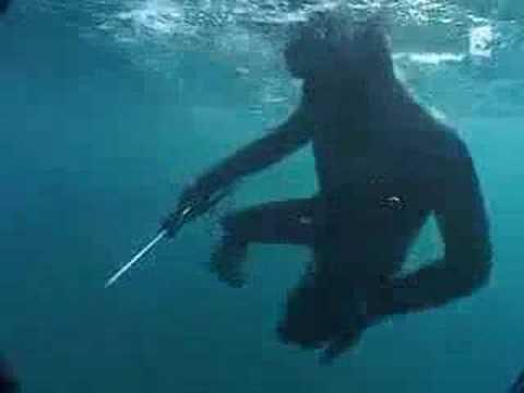 Nage avec un grand requin blanc youtube - Dessiner un requin blanc ...