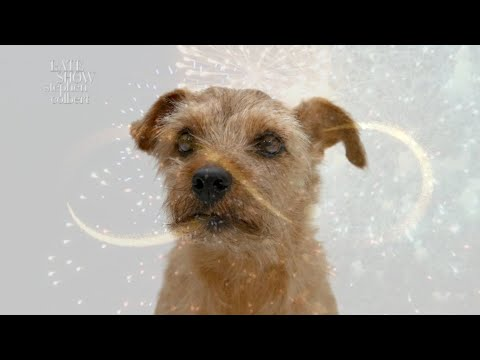 A Message From Dogs: Enough With The Fireworks