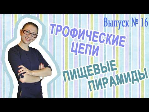 Презентация на тему Простейшие - скачать бесплатно