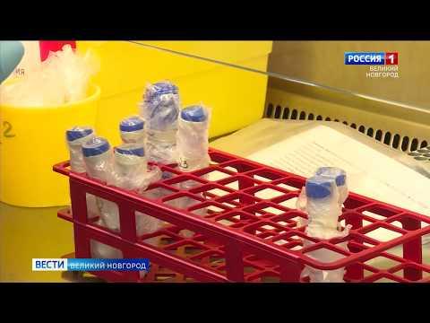 ГТРК СЛАВИЯ Вести Великий Новгород 17 06 20 вечерний выпуск