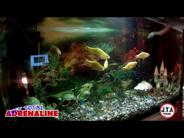 Fish Swimming - 4K Quality Video of fish swimming in our tropical tank @JTAPromos - JTAPromos.net