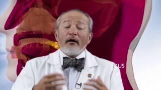 Download Medicina de Hoy - Las Amigdalas