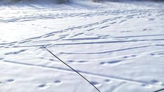 Фэтбайк по снегу -11С°Якутск..Fatbike on snow -11°C Yakutsk.