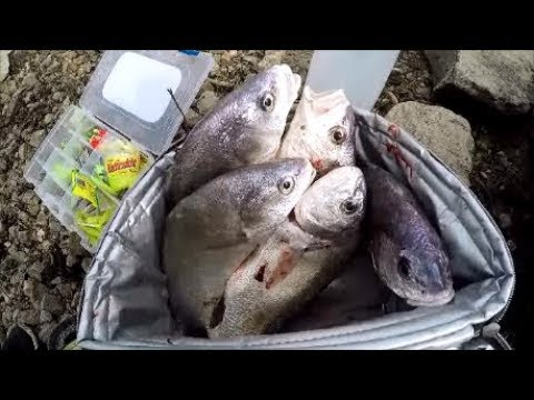 Freshwater Drum, Gasper Goo Is Poor Mans Lobster, Catch And Cook