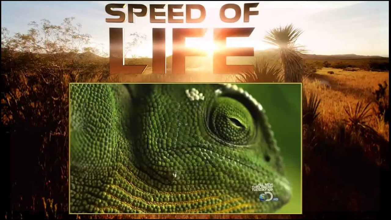 LIFE: Discovery Channel Online - Full Episodes of Season 1 ...