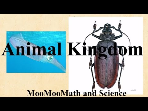 Kingdom Animalia Characteristics,examples