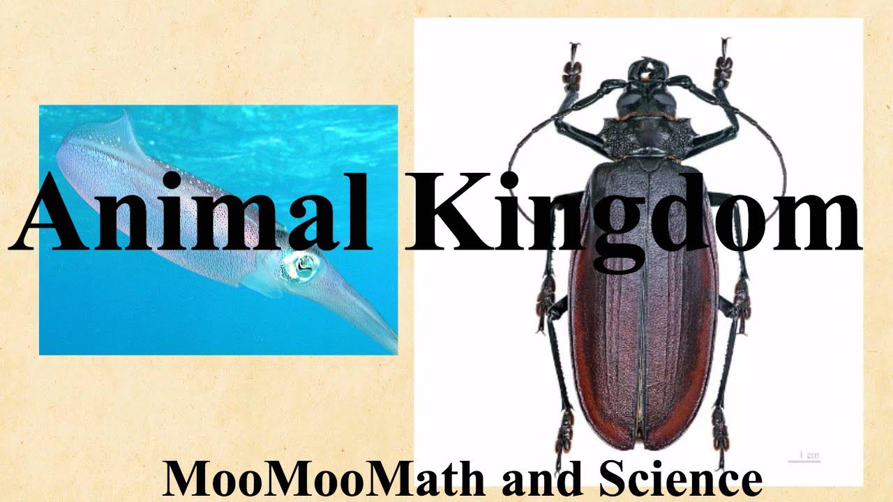 Image of: Phylum Kingdom Animalia Characteristicsexamples Quaddo Science Kingdom Animalia Characteristicsexamples Youtube
