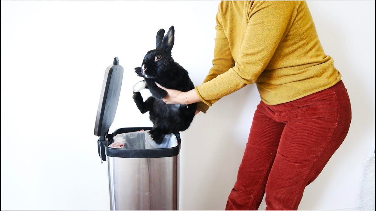 Bunny Begging To Be Taken Home