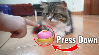 Teaching My Cats To Ring A Bell In 1 Day