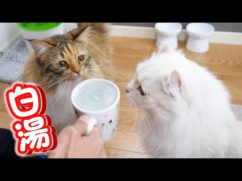 Cats seem to like hot water better than water