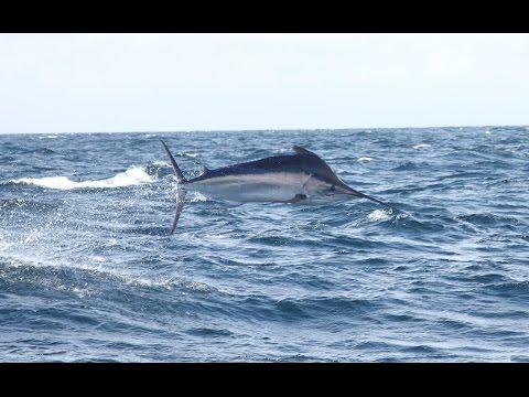 Marlin Fishing In Puerto Vallarta With PV Sportfishing