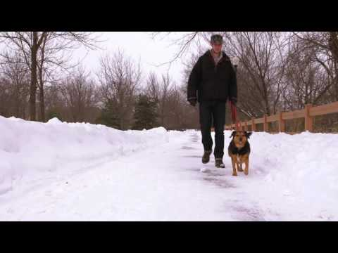 SNOW CITY: DOGTV Exposure