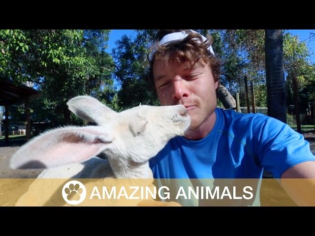 Albino Kangaroo Hugs Man