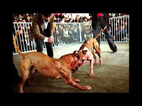 TOP 10 STRONGEST DOGS IN THE WORLD  2016