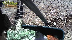 Injured Osprey Rescue - Bird Removal - Fort Myers Wildlife Removal