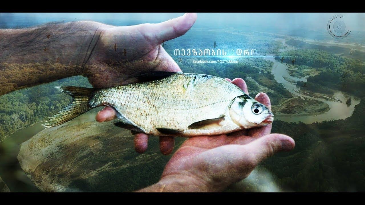 მტკვარზე თევზაობა გარდაბნის აღკვეთილი  თევზაობის დრო • Fishing