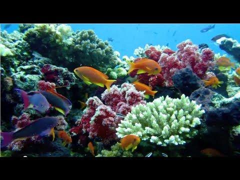 Ultimate Fiji Diving HD revised
