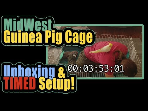 MidWest Guinea Pig Cage Unboxing, TIMED Setup!