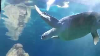 Аквариум Sea Life, Германия Мюнхен