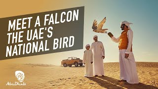 Incredible things to see in Abu Dhabi | Visit Abu Dhabi