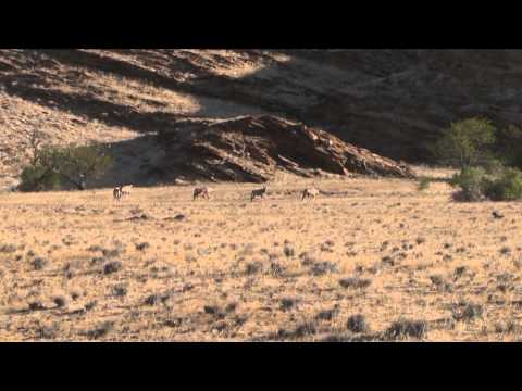Outdoor Quest TV - Namibia KlipspringerGemsbok