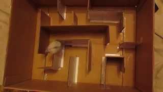 как сделать лабиринт из обувной коробки