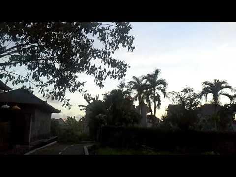 Sound of Birds in Bali