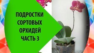 Подростки Орхидей Фаленопсис - часть 2(Продолжение - полив, удобрения, немного про уход вообще и мои планы (орхидеи фаленопсис). Часть 1 https://www.youtube.co..., 2016-07-09T20:17:20.000Z)