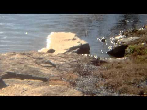Ott Spot Otters!
