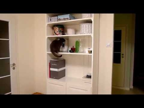 BALBINA, kot kartuski 5 m-cy (chartreux cat) - 3. WĘDKA