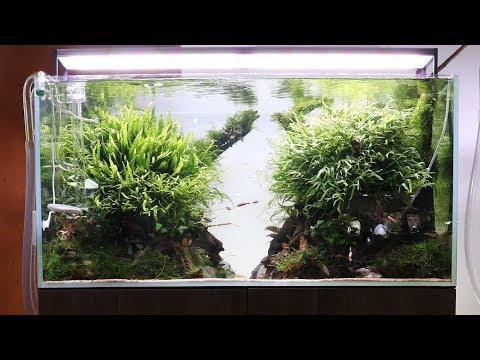 Awesome Aquascaper 900 Planted Tank Aquascape at Aquarium Gardens
