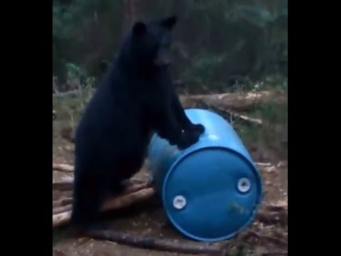 2015 Spring Black Bear Hunt at Northern Outfitters