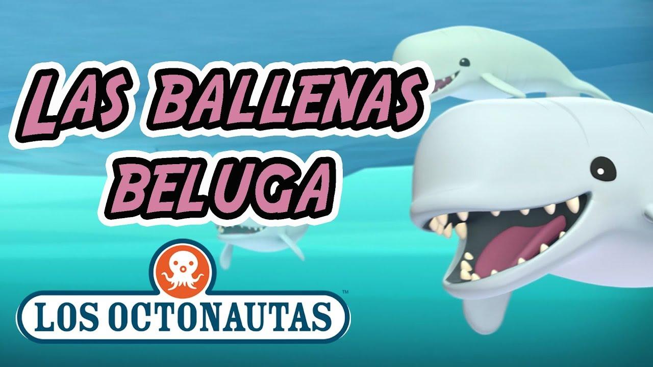 Los Octonautas Oficial en Español - Las Ballenas Beluga | Episodio 34