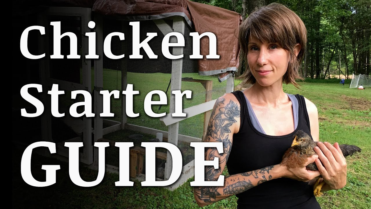 beginners guide to raising backyard chickens youtube