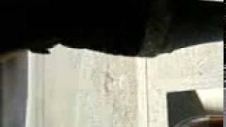 Video-0011.mp4hay camon pinches nalgas feas no cren jejejje