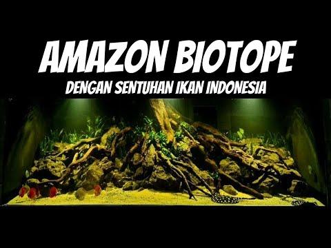 inspirasi-desain-aquascape-untuk-ikan-predator,-tema-biotope-amazon-dengan-kearifan-lokal-(datz)