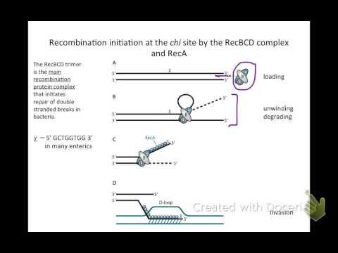 15. Homologous recombination