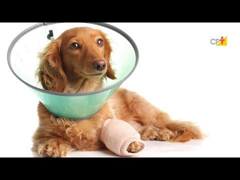 Ferimentos em Pets - Curso Primeiros Socorros para Cães e Gatos