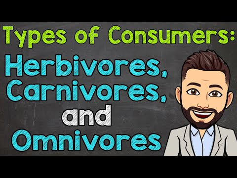 Types of Consumers | Herbivores, Carnivores, and Omnivores