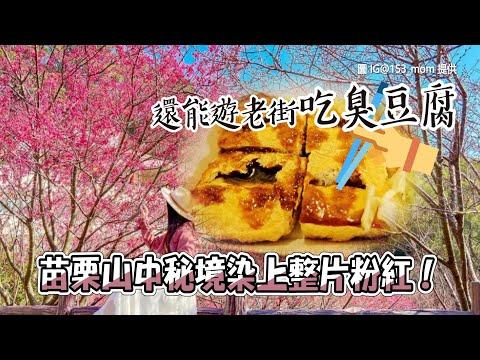苗栗山中秘境染上整片粉紅!山櫻花爆炸盛開 還能遊老街吃臭豆腐