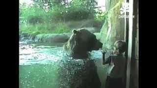 Интересно, медведь играет или проголодался... :)(, 2012-05-17T20:46:14.000Z)