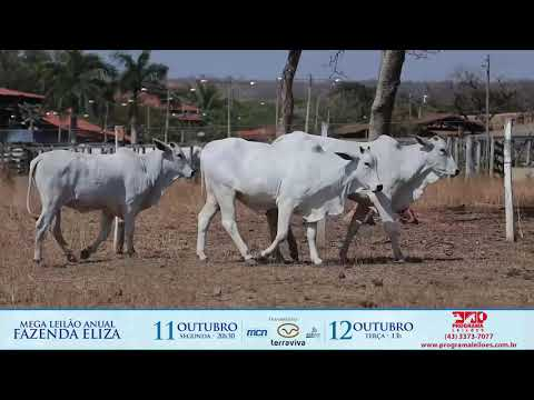 LOTE 157